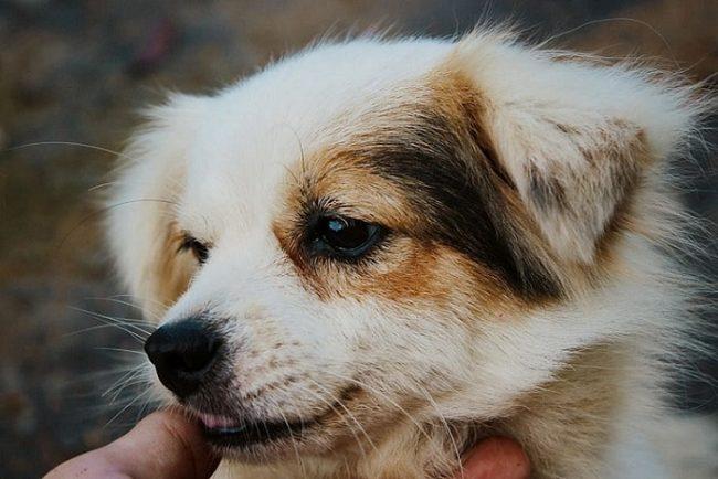 Perro peinado